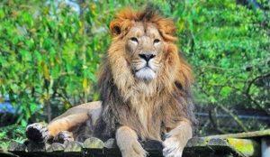 fgkporenghtvne 54iohvyu54ihyni5u4ht5iutyi5o4uy495tui945ffemjl 300x174 بهترین باغ وحش ایران کجاست؟