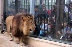 gvfgvmeroigbi ureuhgo8reyti8u4hti84whroiwlehbftwhtfhwrn 300x195 بهترین باغ وحش ایران کجاست؟